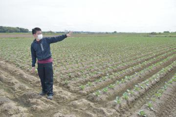 アイアグリ、守谷に大規模農場 キャベツ生産 ドローン活用もの画像