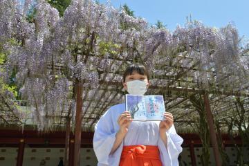 数量限定で販売する藤の花の御朱印を手にする巫女=笠間市笠間の笠間稲荷神社、高松美鈴撮影
