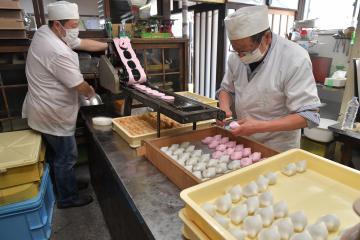 あんを一つ一つ皮で包んで形を整えるかしわ餅作り=水戸市南町の木村屋本店
